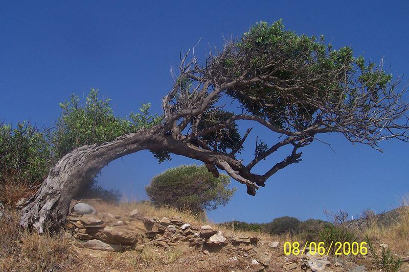 Auf Samos