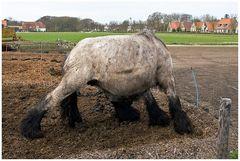 auf Schiermonnikoog,