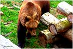 """Auf Schloss Hartenfels sind """"die Bären los""""  .."""