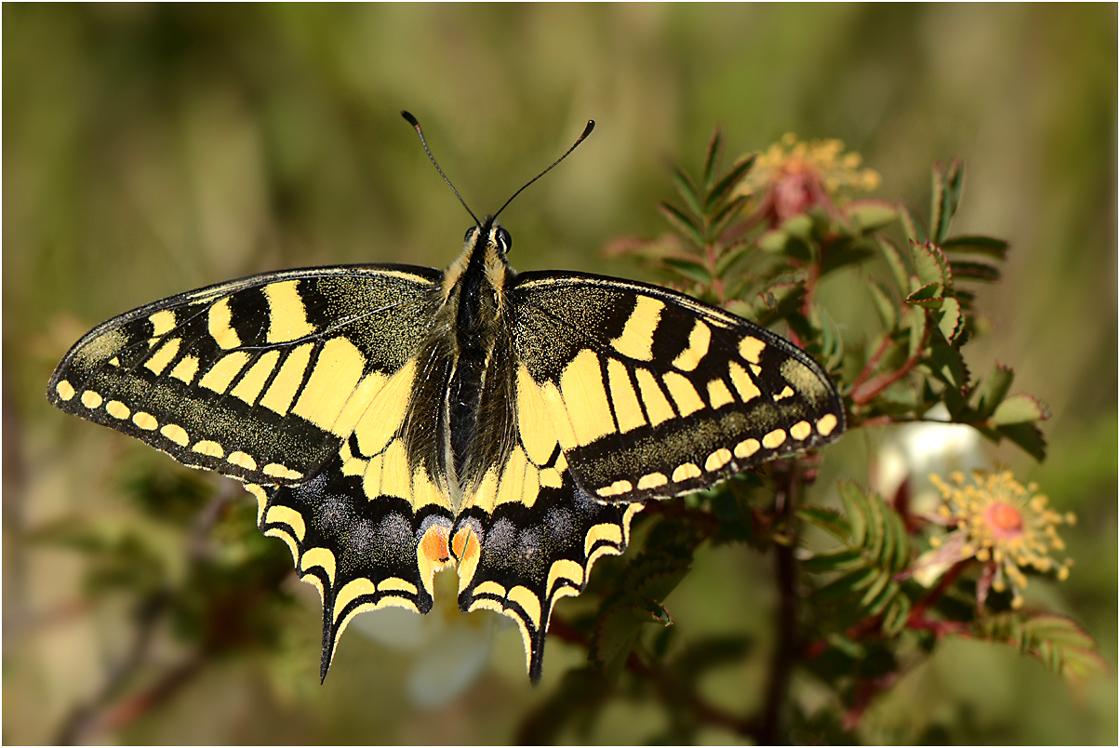 auf Schmetterlingsjagd