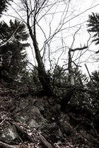 Auf schroffem Fels