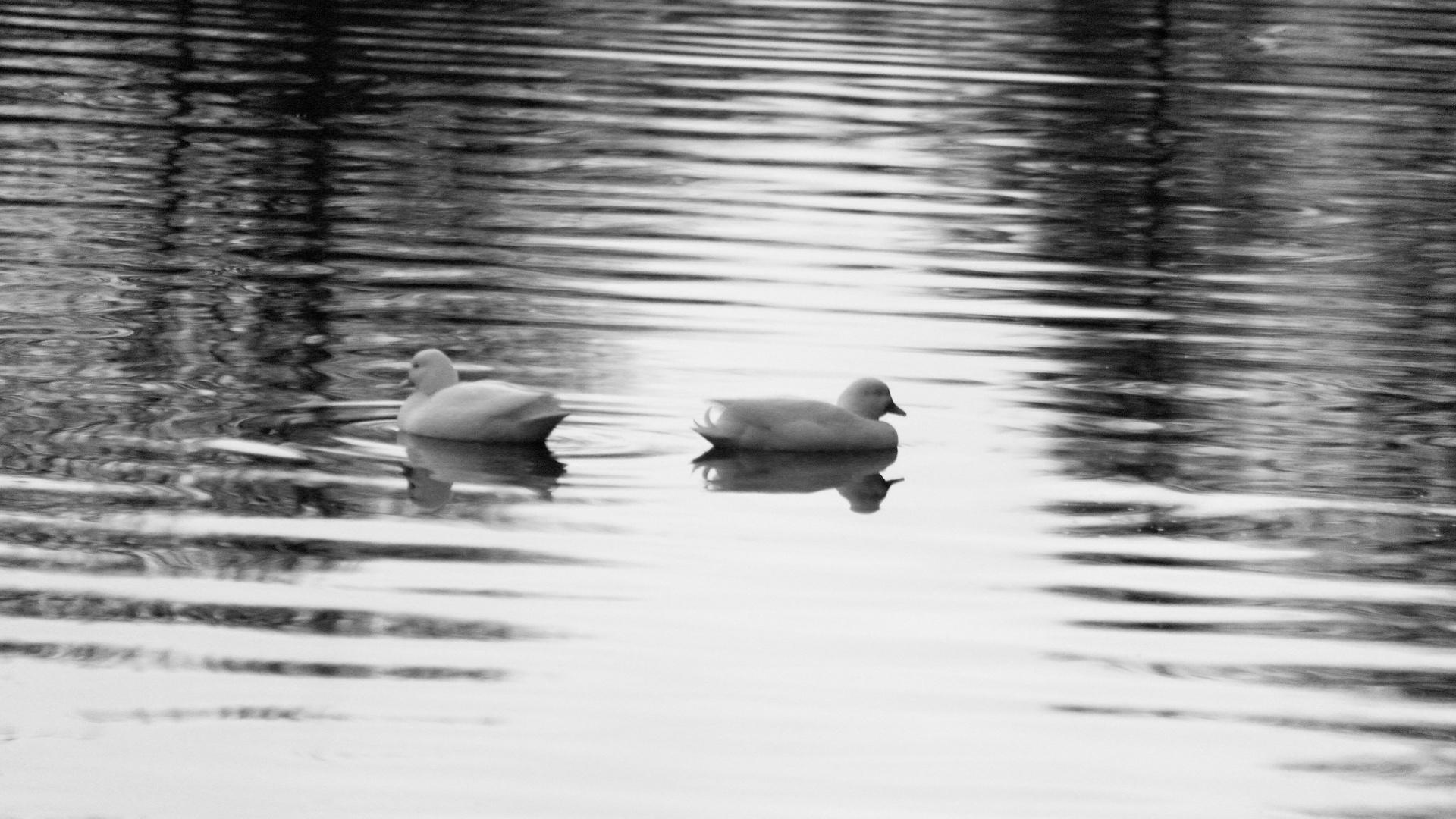 auf Wasser ... / on the water ...