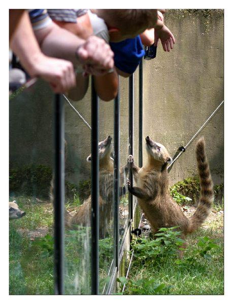 Auf welcher Seite spielt sich der Zoo ab?
