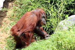 auf zu Tarzan