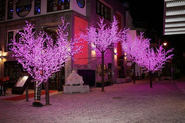 Auf Zypern blühen die Bäume auch nachts.