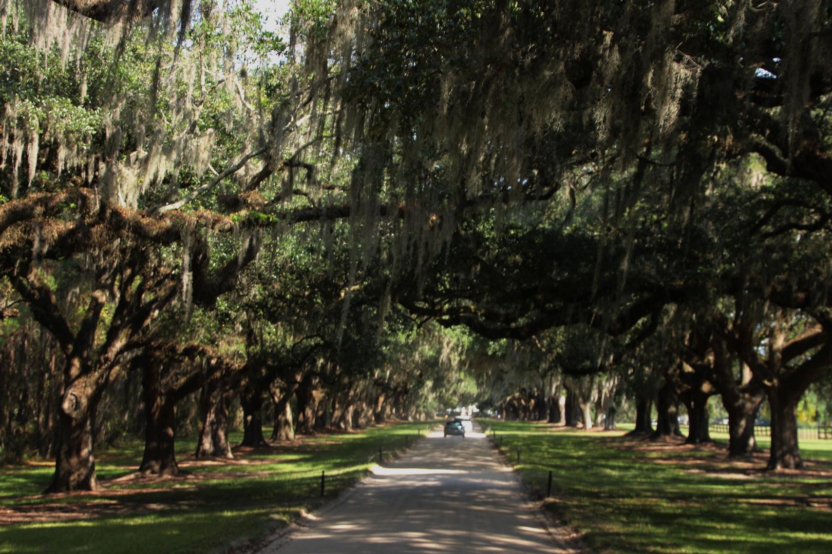 Auffahrt zur Boone Hall Plantage