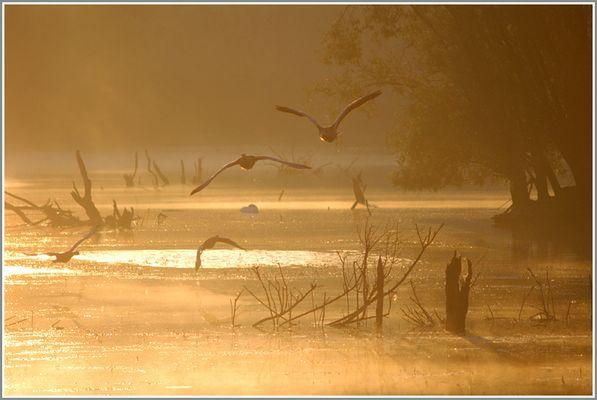 Auffliegende Gänse am Morgen
