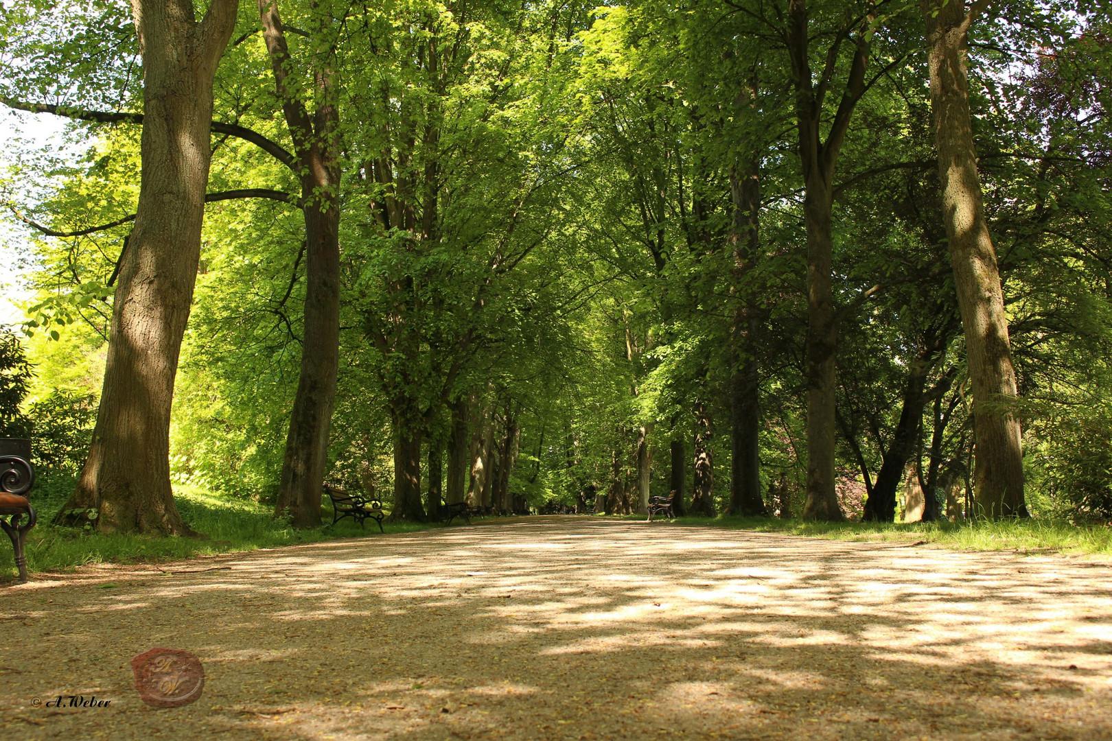 Aufgenommen im Rombergpark in Dortmund