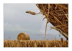 aufgerollte Felder