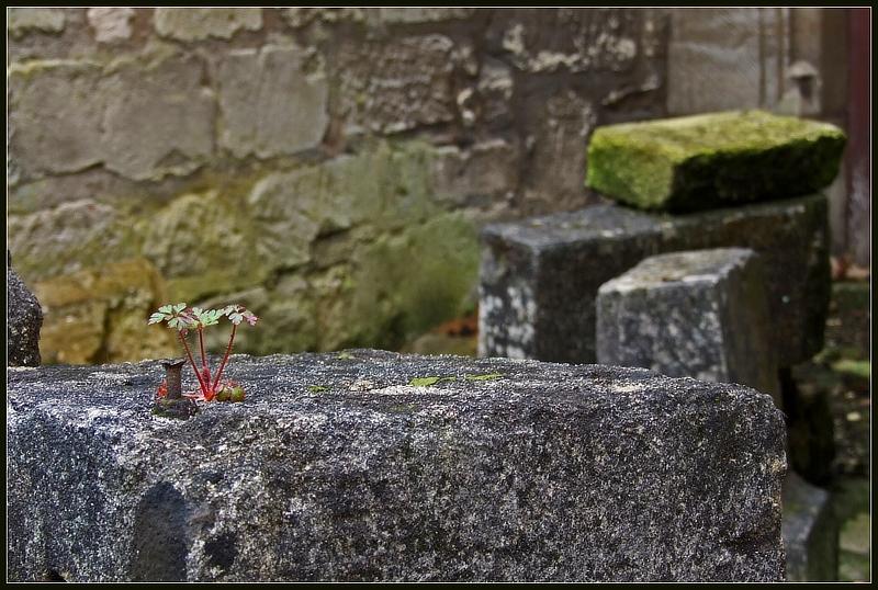 aufgewachsen in Ruinen....