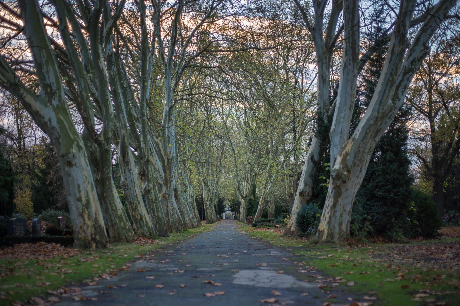 Auf'm Kirchhof teilen sich die Bäume