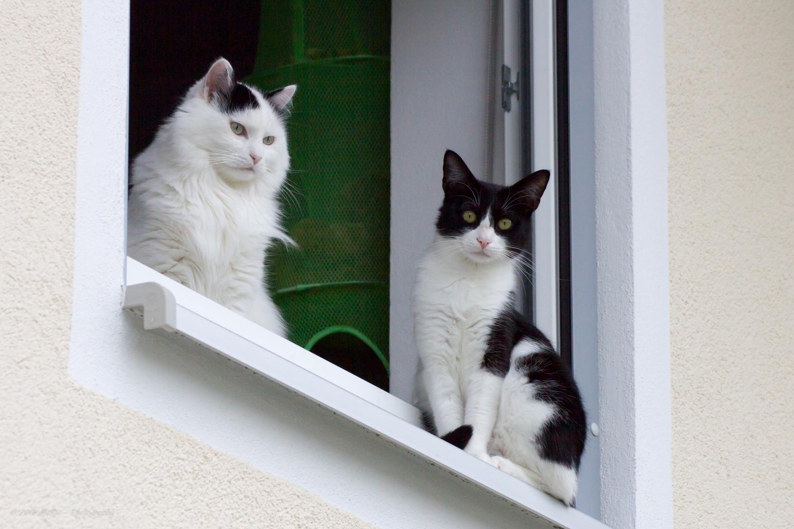 Aufmerksame Beobachter