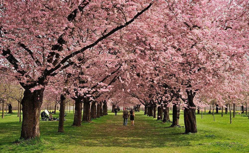 (AUFNAHME IST VOM 17.04.13)   Jedes Jahr im Frühjahr erfasst den...