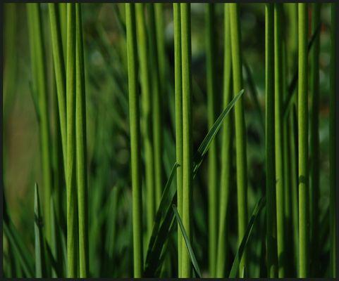 aufrecht-grün