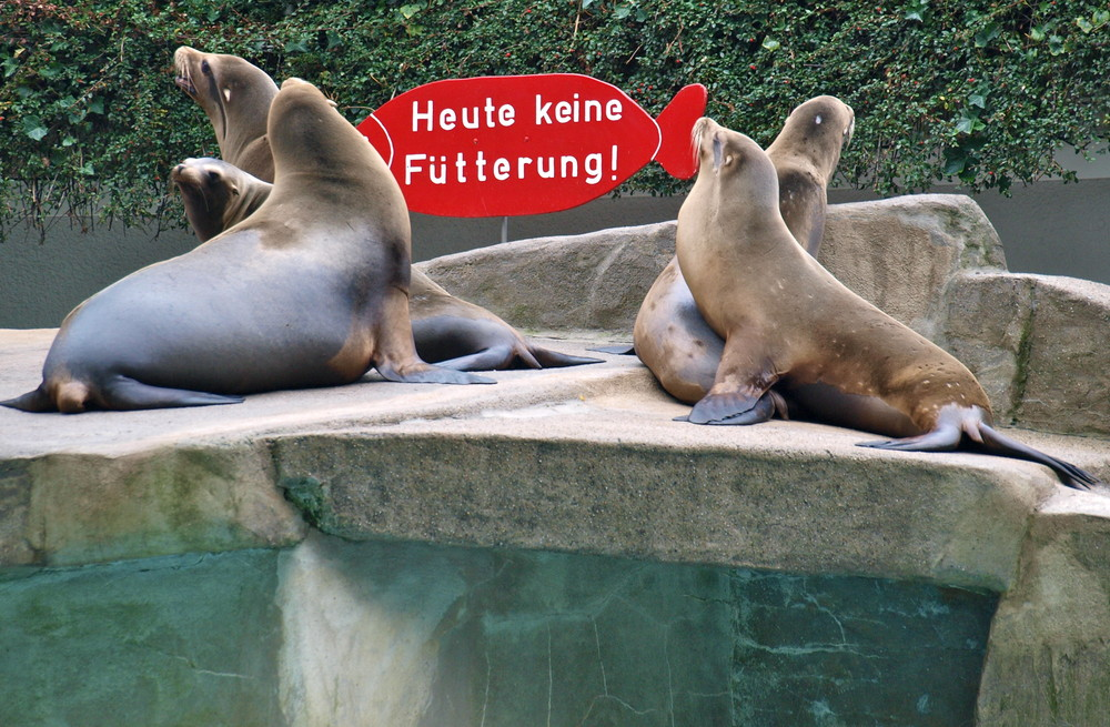 Aufregung bei den Seelöwen...