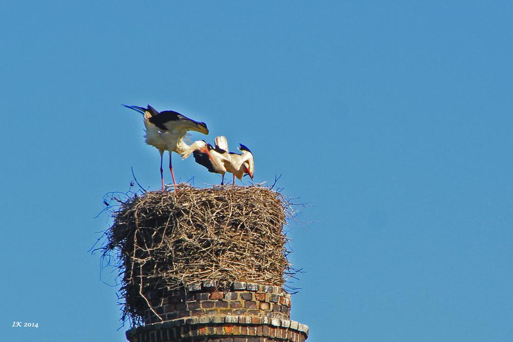 Aufregung im Nest