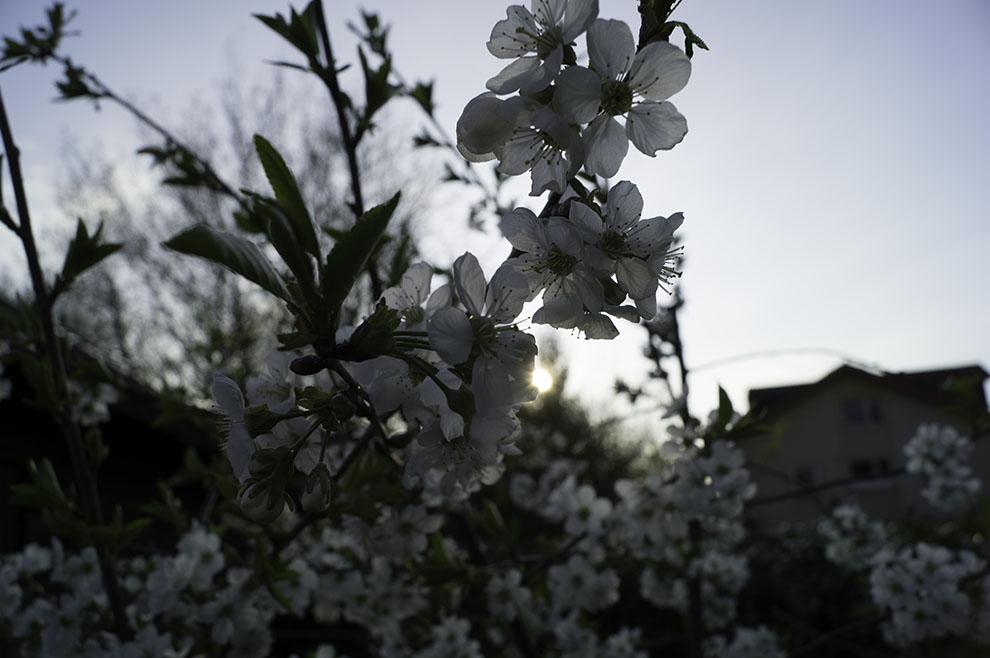 Aufwachen, es ist Frühling! II