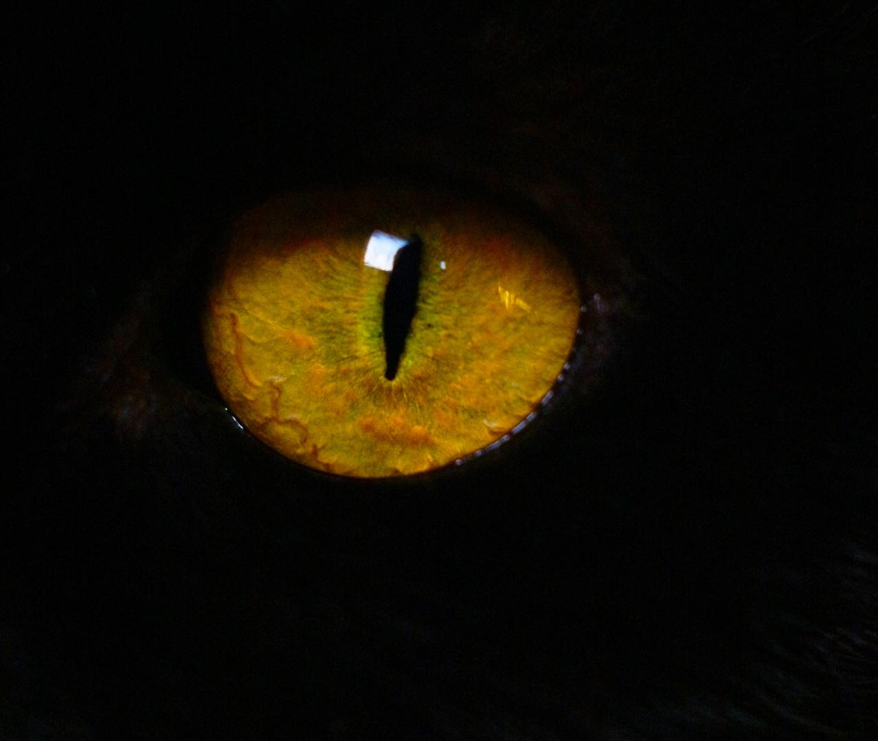 Auge....