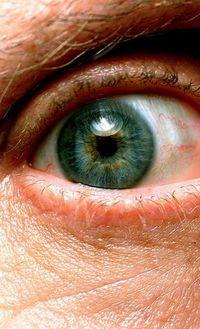 Auge des Maulwurfs