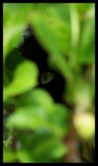 Auge im Gebusch
