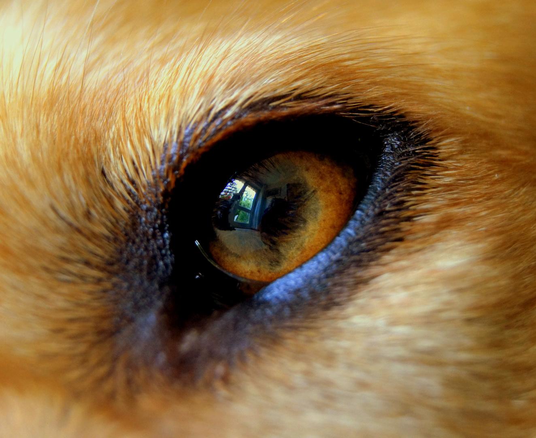 : Auge in Auge :