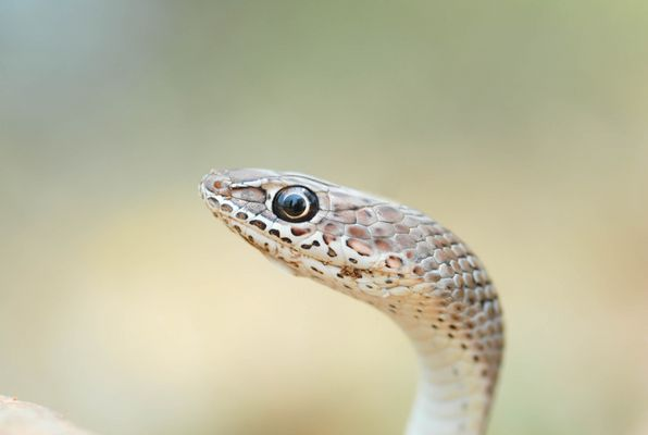 Auge in Auge