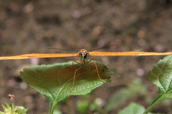 Auge in Auge mit dem Schmetterling