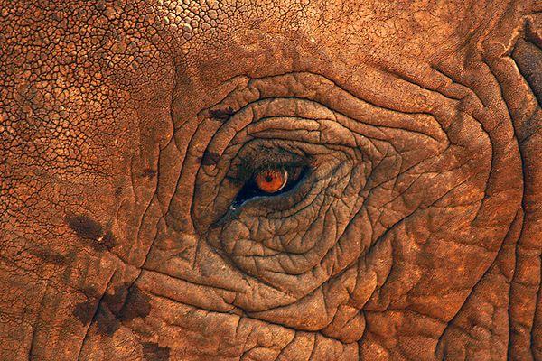 Auge in Auge mit einem Elefanten
