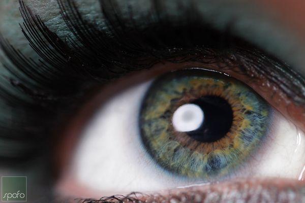 Auge (Makro)