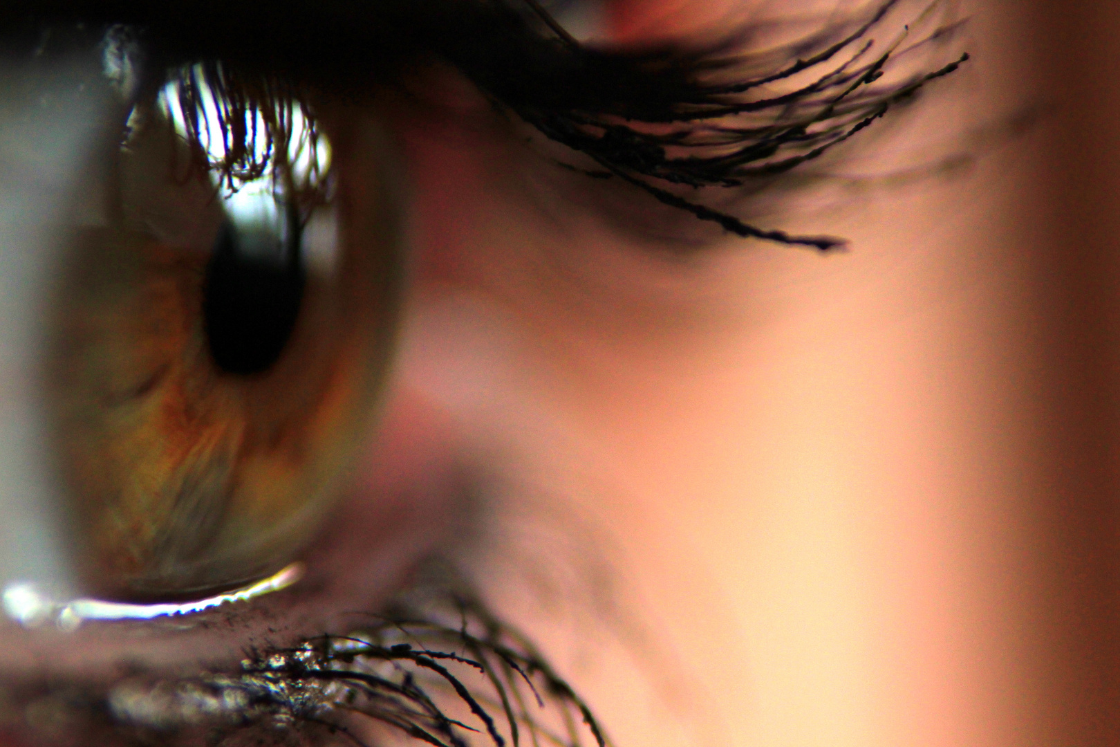 Auge // Makro