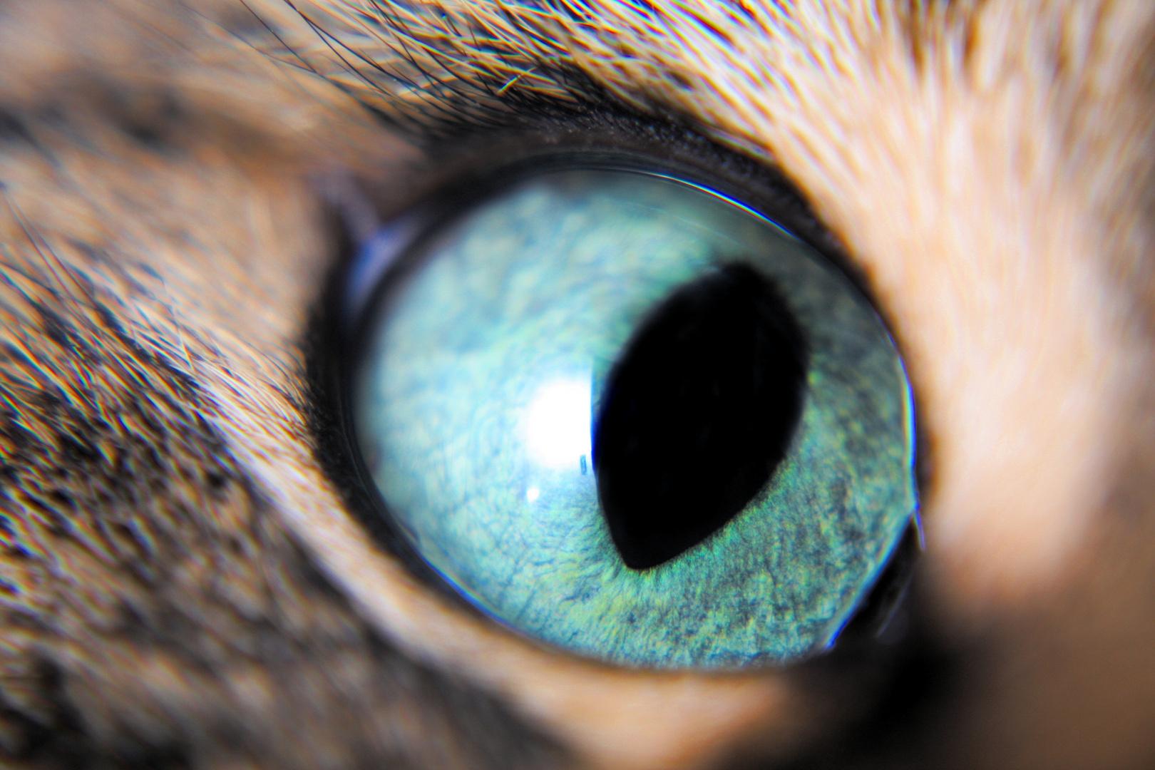 Auge meiner Katze