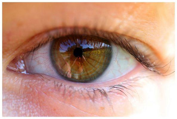 Auge mit Sonnenblumenfeld
