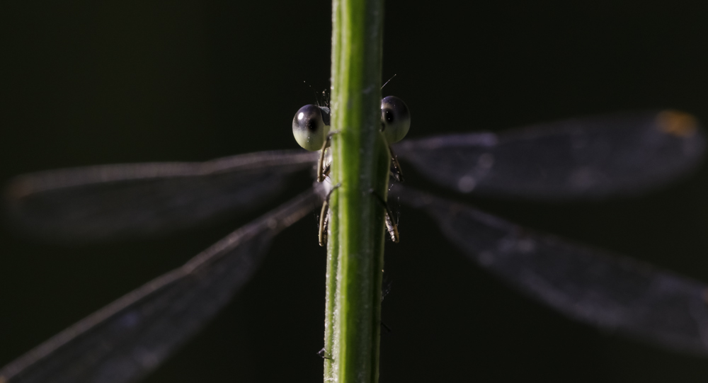 Auge um Auge