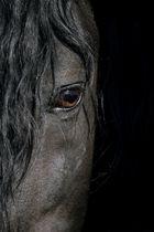 Auge von Andalusier