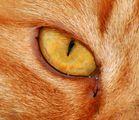 Auge2
