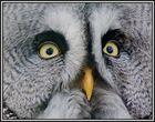 Augen .....