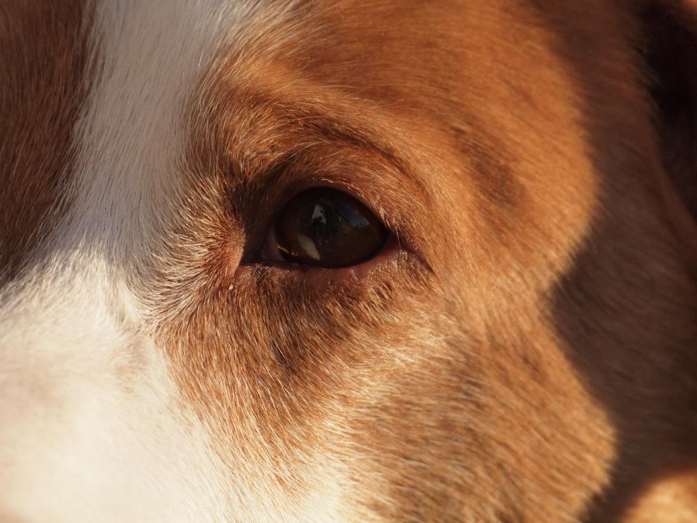 Augen - Blick