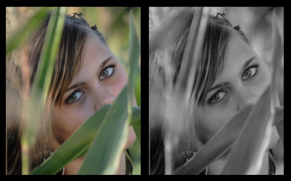 Augen in der Natur