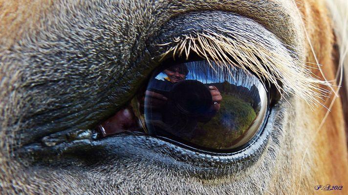 """Augen """"Spiegel der Seele """""""