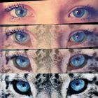 Augen_2