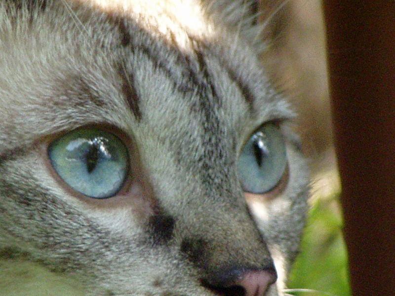Augen...blicke - Laura