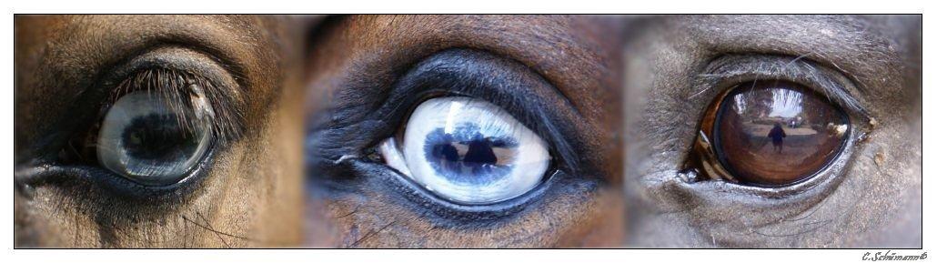 Augenvielfalt