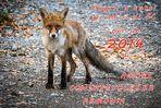 Auguri di Buon Anno a tutti gli Amici di Fotocommunity