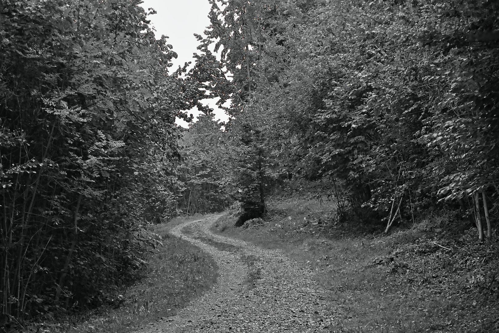 auif meinem Waldweg 1