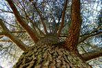 Auprès de mon arbre,