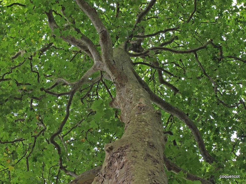 Auprès de mon arbre, je vivais heureux.