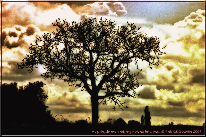 Auprès de mon arbre, Near my tree...