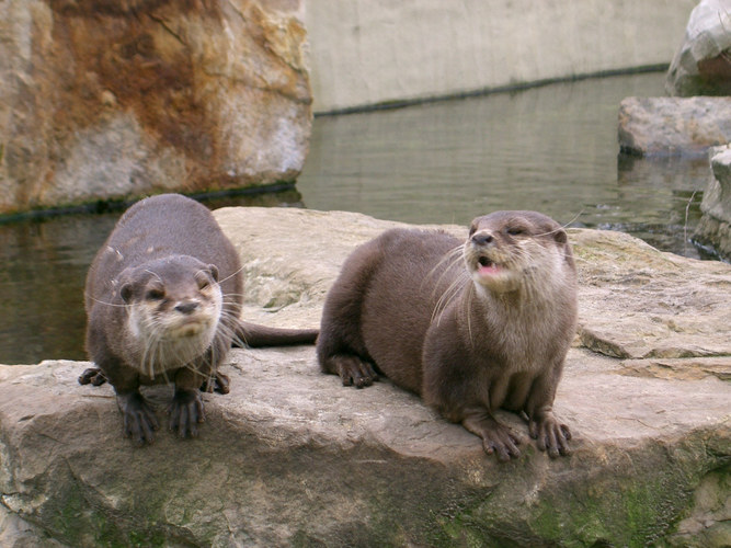 Aus Berlins Zoo