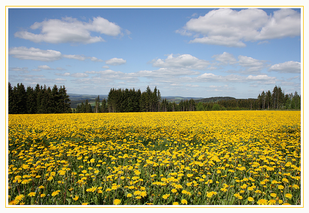 Aus dem Bilderbuch des Frühlings....
