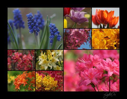 ...aus dem Blumengarten...